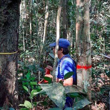 Científicos descubren cómo y por qué mueren los árboles amazónicos