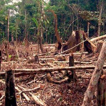 La pérdida de bosques tropicales subió en 2020; Bolivia escaló al tercer puesto